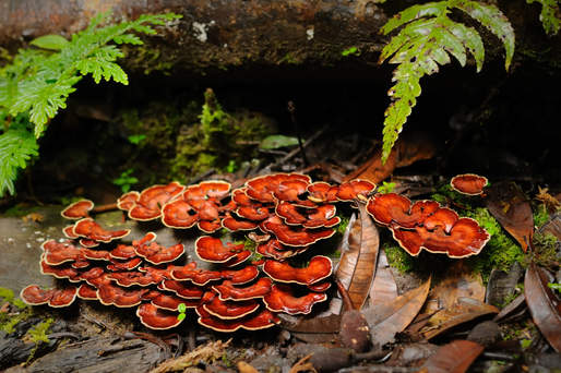 Grzyby w lesie tropikalnym Borneo