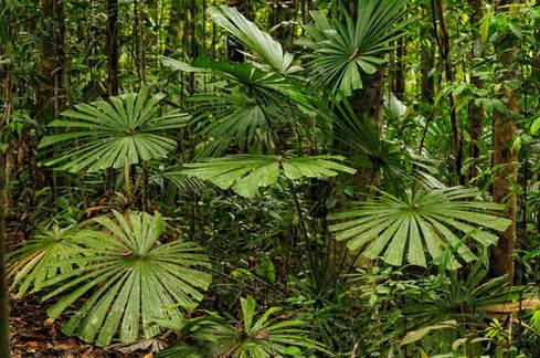 Dżungla Borneo