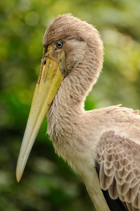 Ptaki w Parku Taman Tasik Perdana, KL
