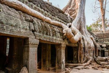 Świątynia Ta Prohm, Kambodża