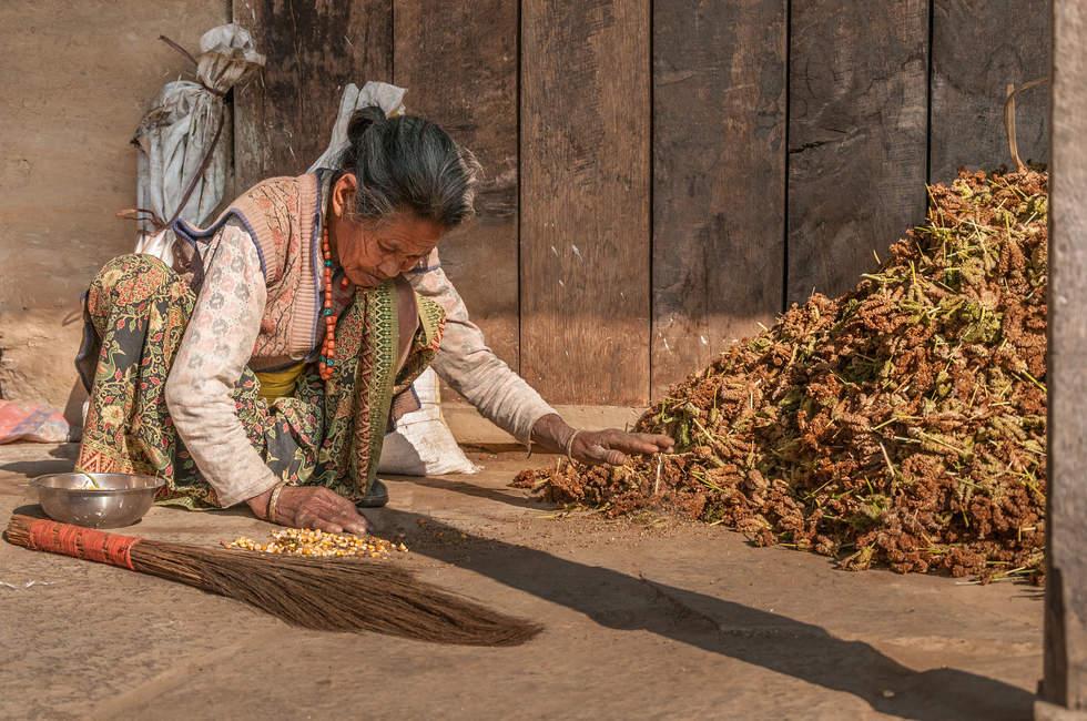 Starsza nepalska kobieta w pracy
