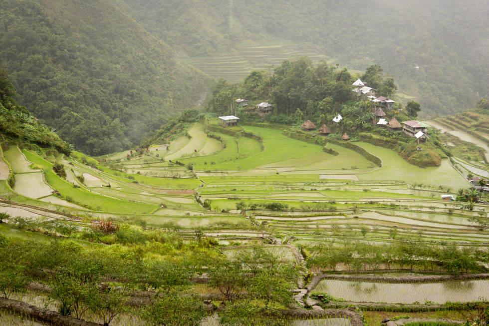 Tarasy ryżowe Batad