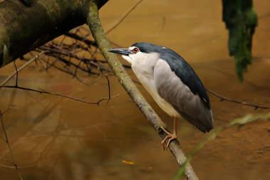 Ptak w dżungli Borneo