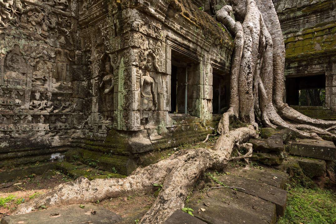 Drzewa porastające Ta Prohm