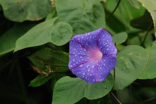 Kwiat w dżungli, Borneo