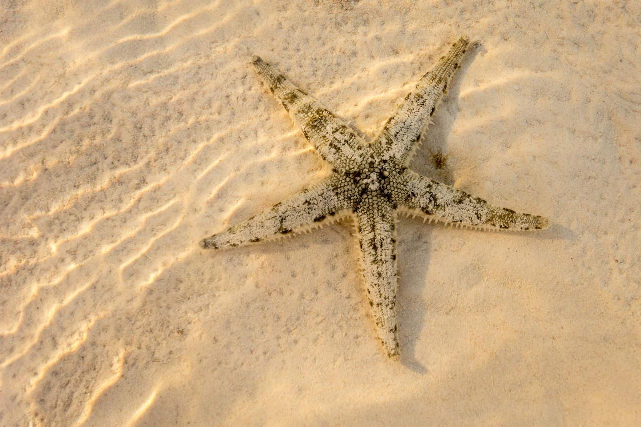 Rozgwiazda na plaży, półwysep Anda, Bohol