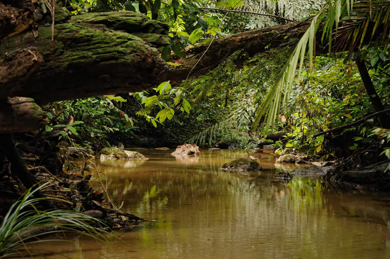 Strumyk w dżungli Borneo, Malezja