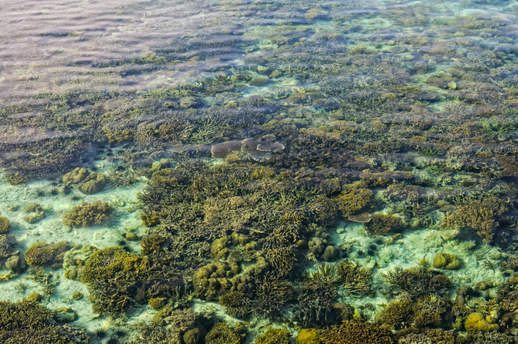 Rafa koralowa, Mabul, Semporna