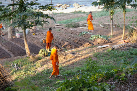 Mnisi na polu, Laos