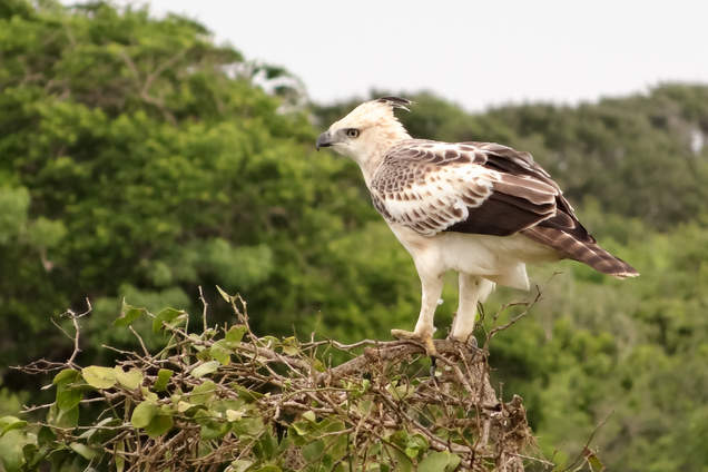 Ptak w parku Yala, Sri Lanka