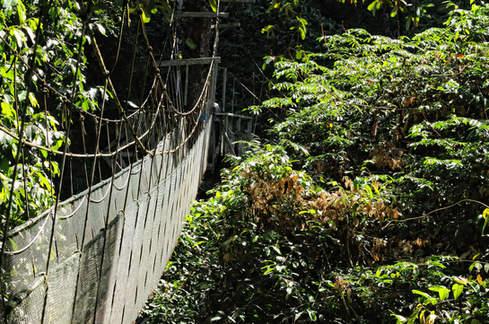 Wiszący Most w dżungli Gunung Mulu