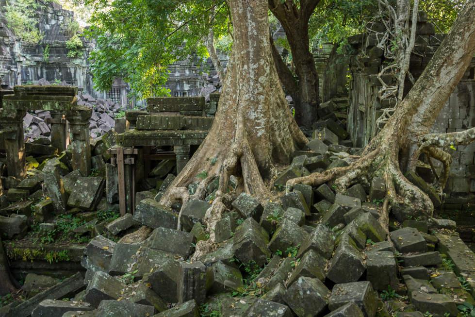Beng Mealea porasta dżungla