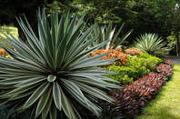 Ogród Botaniczny, Kandy, Sri Lanka