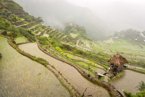 Trasy ryżowe w okolicy Banaue