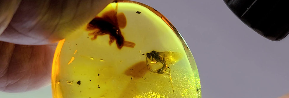 RARE LARGE Wasp in Dominican amber.