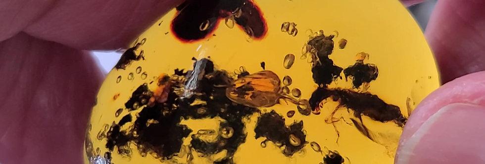 RARE ENHYDRO Termite in Dominican amber.
