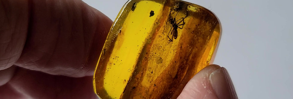 ULTRA RARE Tunnelweb Spider in it's NEST!  Dominican amber.