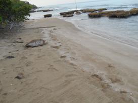 turtle sea3.jpg