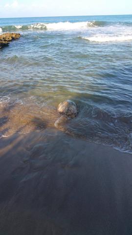 turtle sea2.jpg