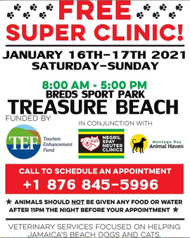 Vet clinic at Treasure Beach