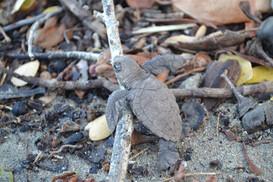turtle baby.jpg