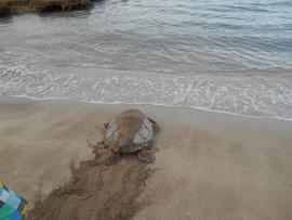 turtle sea4.jpg