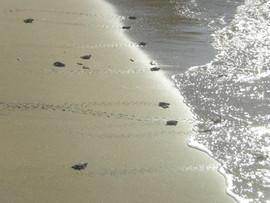 turtle shore.jpg