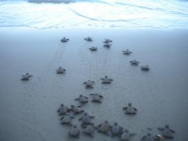 turtle babies.jpg