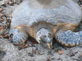 turtle face.jpg