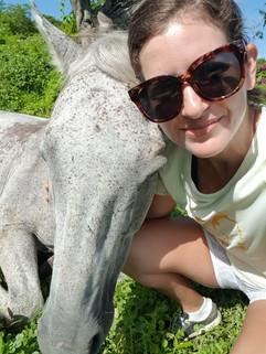 Braco horses