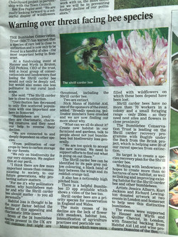 Bumblebee Trust
