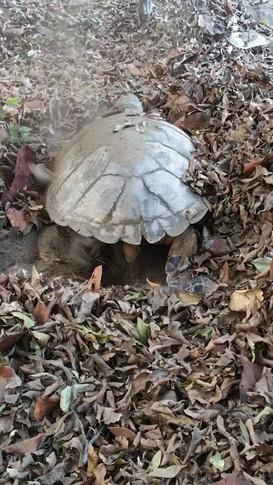 turtleleaves2.jpg
