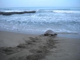 TBTG sea2.jpg