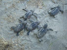 turtle babes.jpg