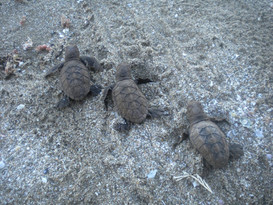 turtle babies5.jpg