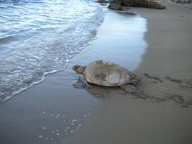 turtle walk.jpg