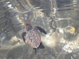 turtle water.jpg