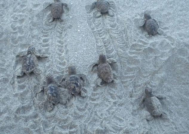Treasure Beach Turtle Group