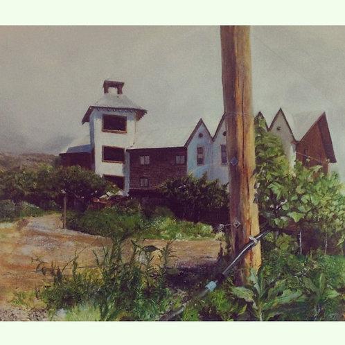 Hillside Winey 1