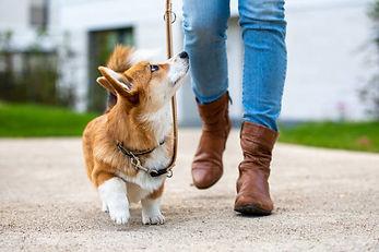 dog lady.jpg