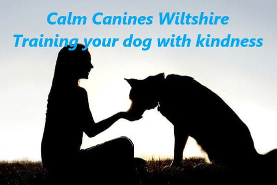 calm canines wiltshire dog trainer near