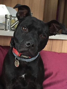 Dog, canine, behaviour, positive, Trowbridge, Melksham, Devizes, Warminster