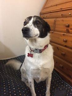 dog, behaviour, positive, renforcement, training,