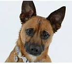Dog Trainer, calm canines wiltshire