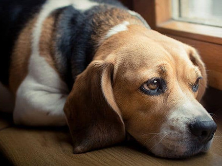 Aversive Training, why is it bad for my dog ?