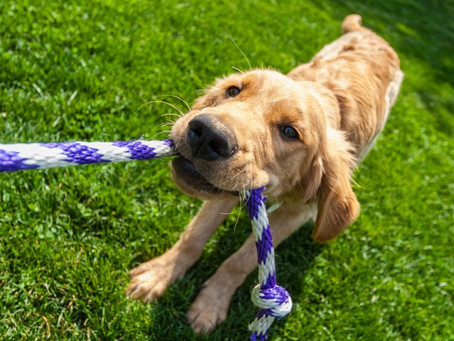 Obedience, does your dog need it and to what extent ? Re-thinking Obedience...