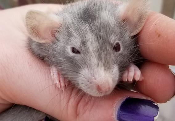 Marten Rat