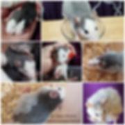 gwsnmq8vpwi21.jpg