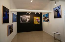 exhibi3.jpg