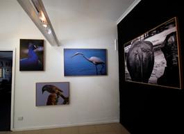Amber NOseda exhibition